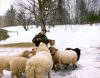 Hompl with sheep